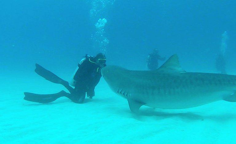 Der Haiflüsterer Andy Dellios