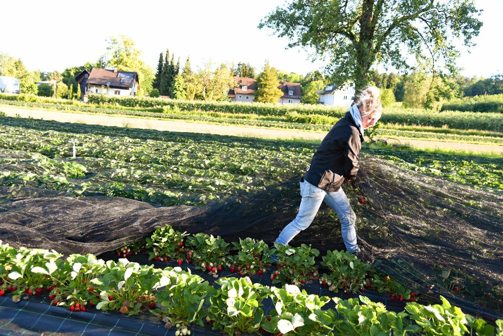 Die Vorbereitungen: das Abdecken der Felder